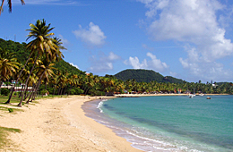 Palm tree beach Antigua