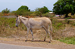 Donkey on road